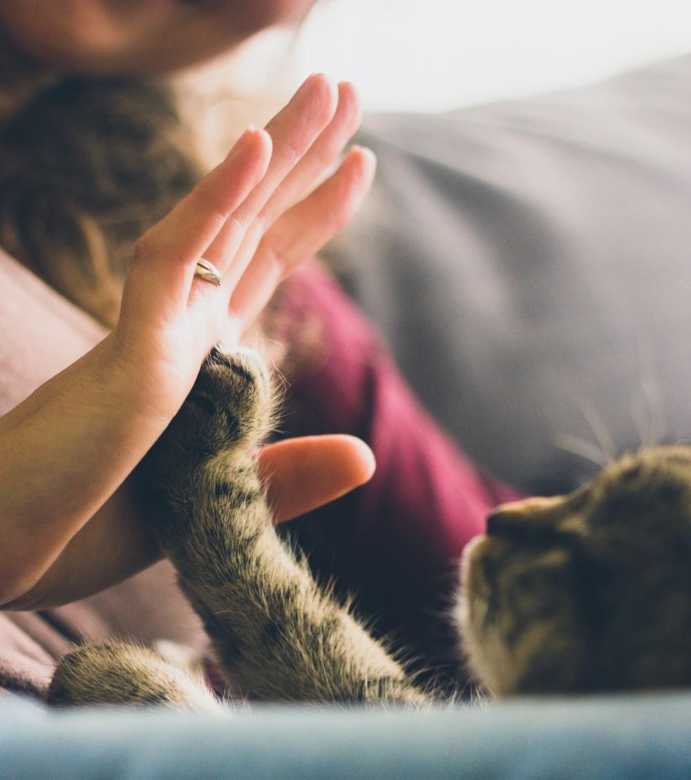 cat-hand-pexels-snapwire- crpd